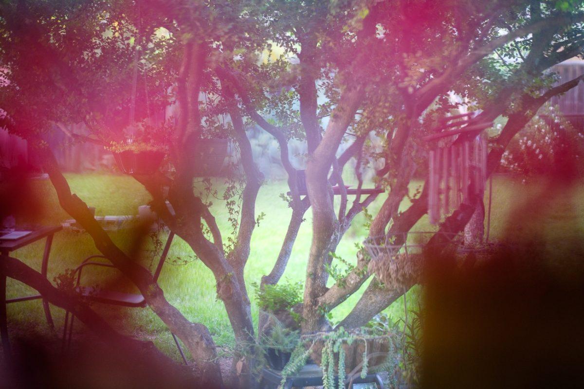 Backyard abstract