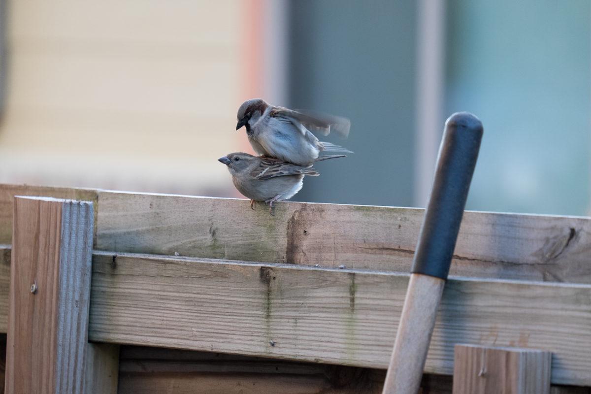 Birds mounted