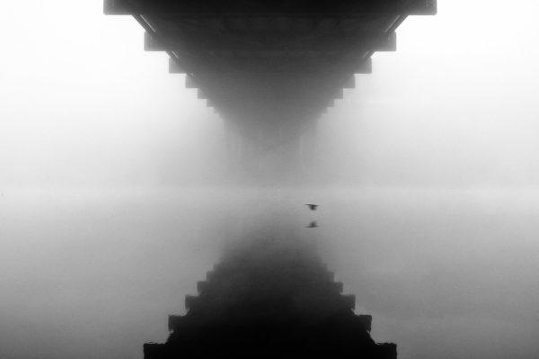 Bird Gliding Across Lake Austin Underneath the Pennybacker (360) Bridge