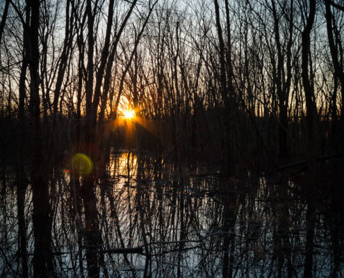 Photo of the sunset through the trees at Shelby Bottoms Park Nashville TN