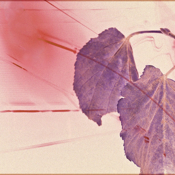 Midnight Leaves - Fine Art Multiple Exposure Photo